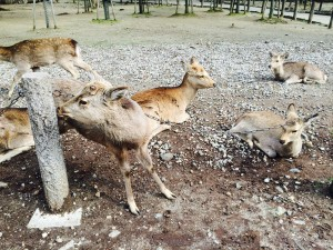Amazing photo's from Japan - Deer running free